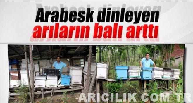 arabesk dinleyen arılar