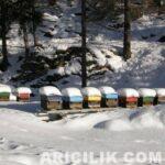 karın altındaki arı kovanları -13