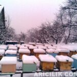 karın altındaki arı kovanları 24
