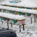 karın altındaki arı kovanları 25