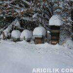 karın altındaki arı kovanları 34