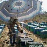Şemsiye İle Arıları Güneşten Koruma 1
