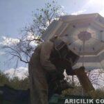 Şemsiye İle Arıları Güneşten Koruma 10