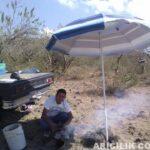 Şemsiye İle Arıları Güneşten Koruma 5