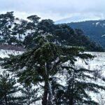 2015 Yılı Kar Manzaraları 57