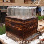 Arıların Kavanoza Bal Yapması 13