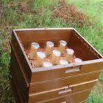 Arıların Kavanoza Bal Yapması 5