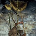 Nepal Arıcıların Arılardan Bal Alması 13