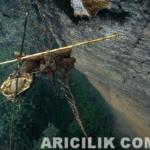 Nepal Arıcıların Arılardan Bal Alması 14