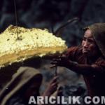 Nepal Arıcıların Arılardan Bal Alması 16