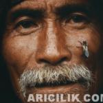 Nepal Arıcıların Arılardan Bal Alması 19