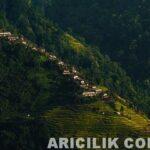 Nepal Arıcıların Arılardan Bal Alması 4