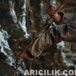 Nepal Arıcıların Arılardan Bal Alması 5