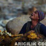 Nepal Arıcıların Arılardan Bal Alması 7