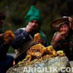 Nepal Arıcıların Arılardan Bal Alması 8