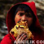 Nepal Arıcıların Arılardan Bal Alması 9