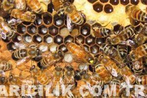 Beekeeping Pictures