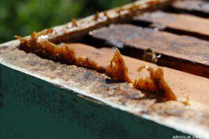 propolis nedir ve faydaları nelerdir
