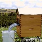 arı kovanı açmadan bal toplayın 11