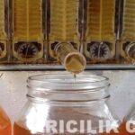 arı kovanı açmadan bal toplayın 2