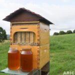 arı kovanı açmadan bal toplayın 6