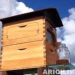 arı kovanı açmadan bal toplayın 8