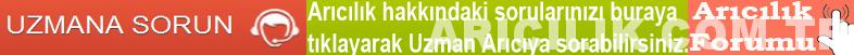 Arıcılık Forumu