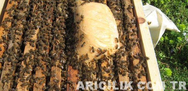 arı keki