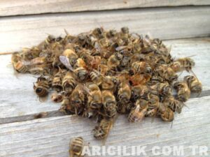 ölü arılar