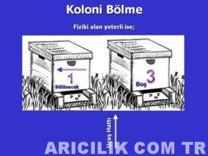 arı bölme 1