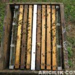 arı nasıl bölünür 8