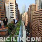 şehirde arıcılık 15