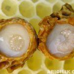 arı sütü