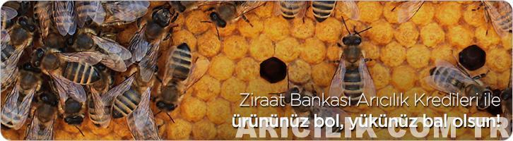 ziraat bankası arıcılık kredisi 1