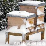 kışın arıya kek verilir mi 3