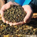 arıların zehirlenmesi 11