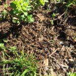 arıların zehirlenmesi 2