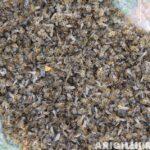 arıların zehirlenmesi 6