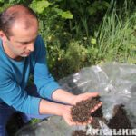 arıların zehirlenmesi 7