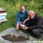 arıların zehirlenmesi 9