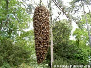 bahçeme arı oğulu geldi 5