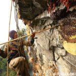 bu kayalardan bal almak cesaret ister 16