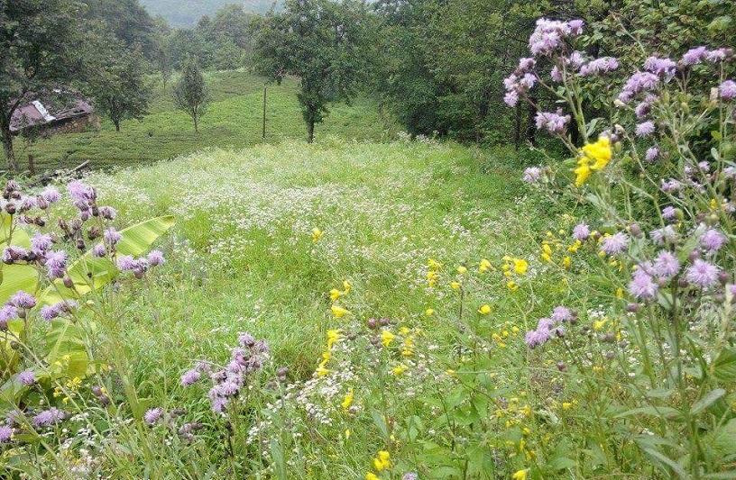 arılarda ilkbahar bakımı