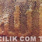 Anzer Balının Kilosu 700 Lira