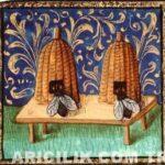 Anadolu Arısı