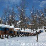 Kar Altında Kalan Arı Kovanları