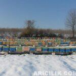Arılarla 2015 Yılı Kar Manzaraları
