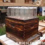 Arıların Kavanoza Bal Yapması