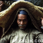 Nepallı Arıcıların Arılardan Bal Alması