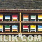 Kapalı Arılık Örnekleri